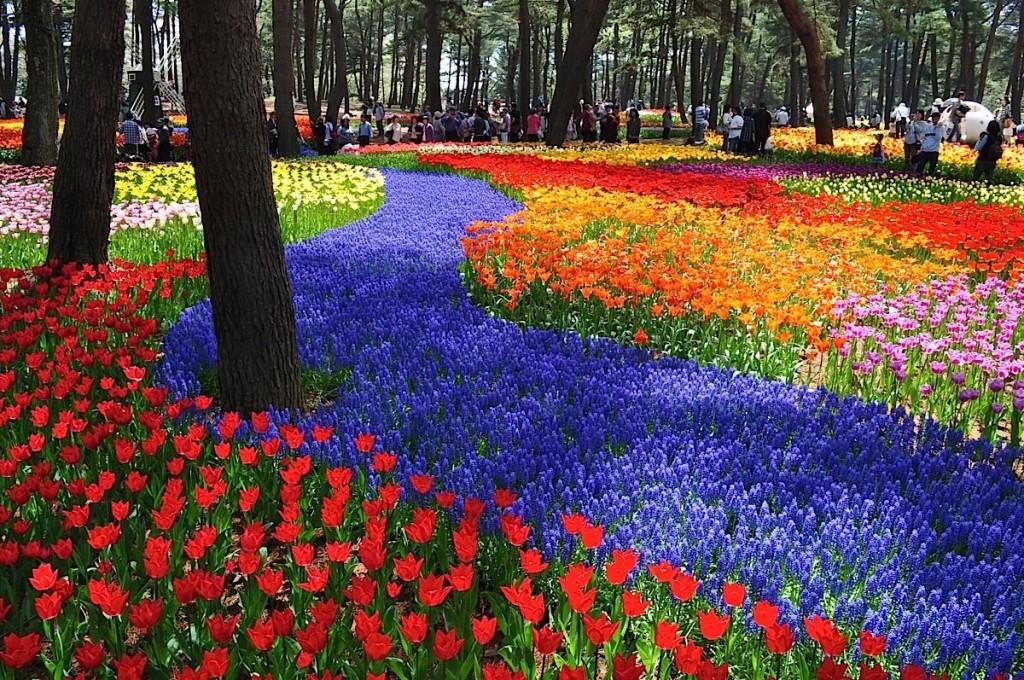 Hitachi_tulip2