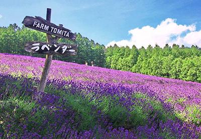 farm-tomita0