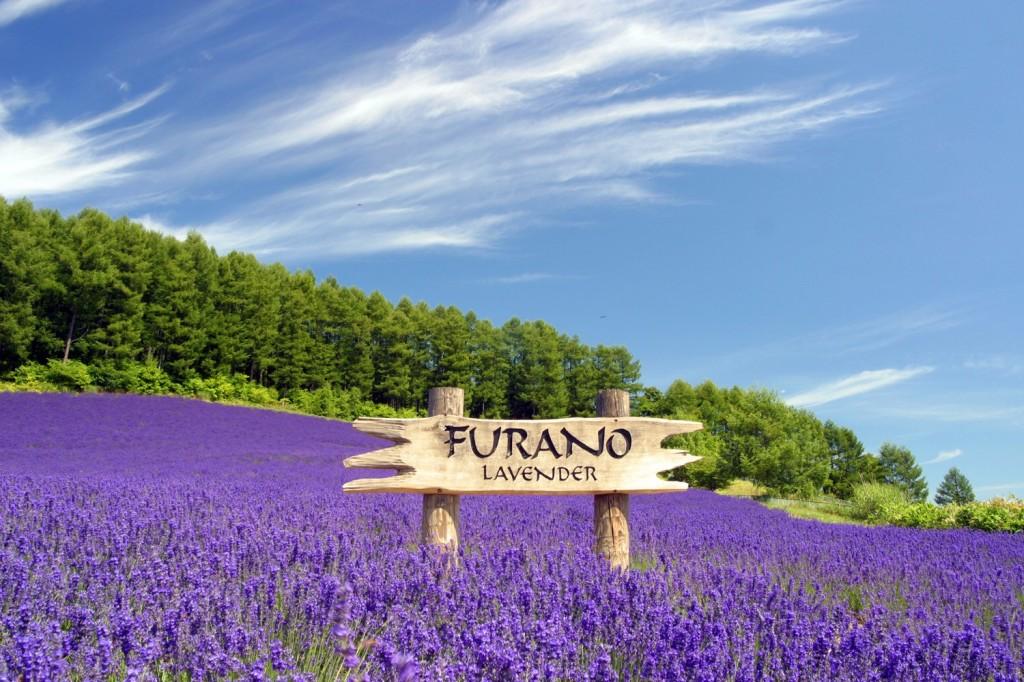 furano_lavender
