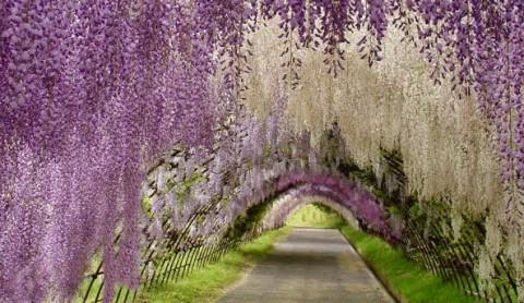 kawachi-fuji-garden3